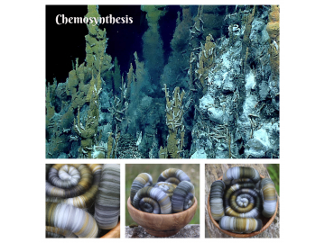 Chemosynthesis Rolags - 100g